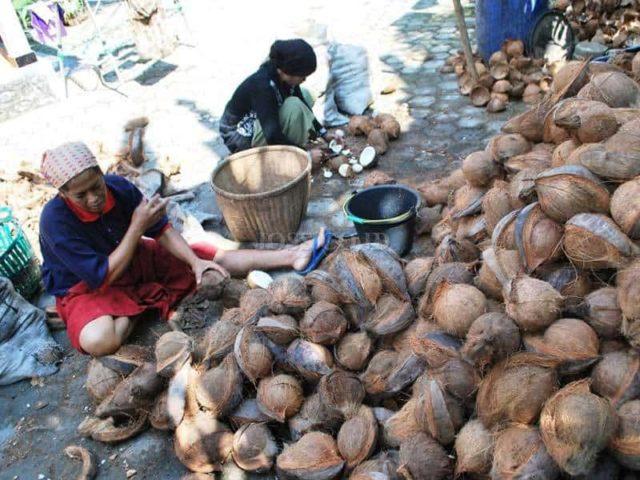 harga kelapa