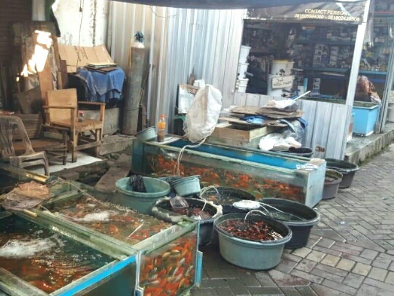 Pasar ikan hias