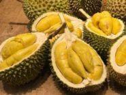 Kenapa Durian Harganya Mahal? Ini Manfaat Yang Harus Kamu Tau