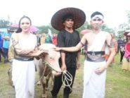 Tradisi Kirab Kebo Bule Juga Ada di Batang