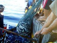 Nelayan Cantrang Diijinkan Melaut, Asal…
