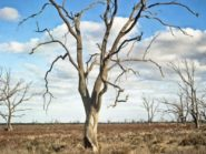 Australia Bagian Utara Banjir, Bagian Selatan Kekeringan Dengan Suhu Capai 49 DC