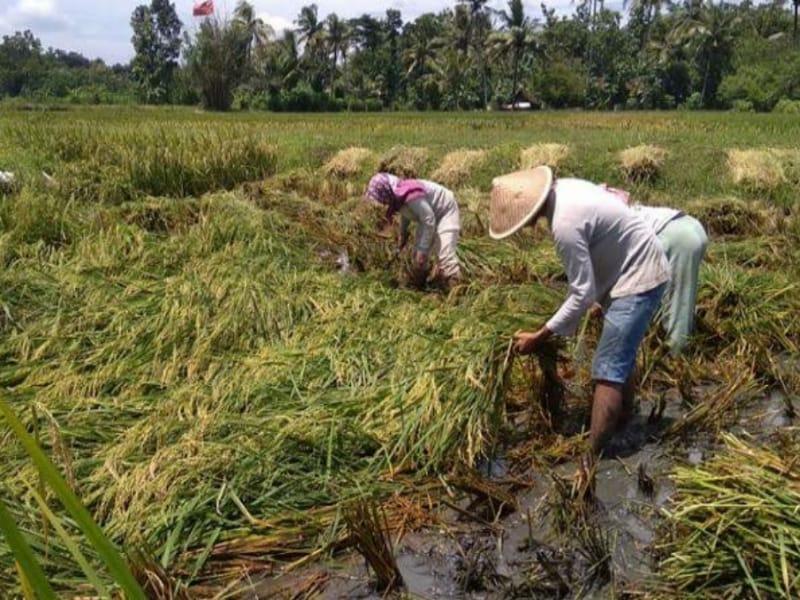 Petani Bantul Rugi Miliaran akibat Banjir Longsor