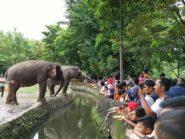 Libur Nyepi, Jogja Kebanjiran Wisatawan Bali