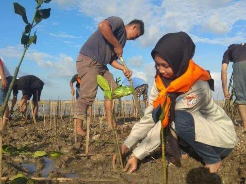 Mapala Arga Dahana UMK Tanam 6.500 Mangrove di Pantai Pohijo Pati