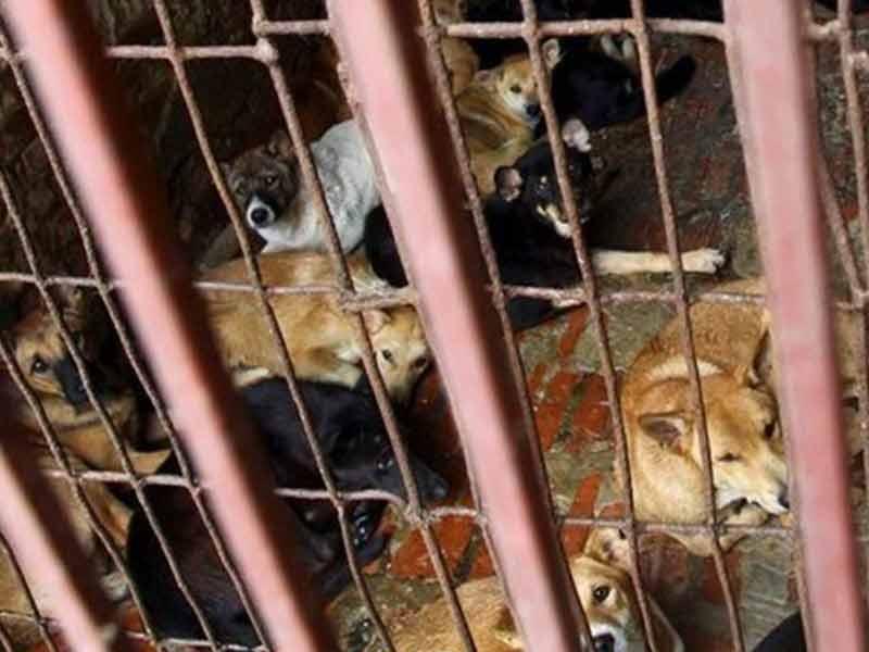 Tutup Warung 'Guguk' Selamatkan 2.000 Ekor Anjing/Bulan