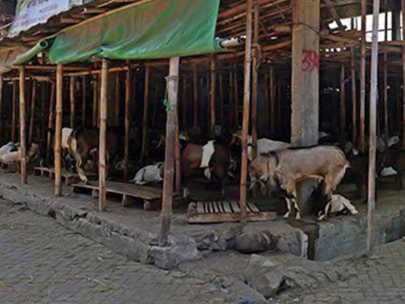 Pengajuan Hibah Lahan Ditolak, Pasar Hewan Semanggi, Solo Tak Jadi Pindah