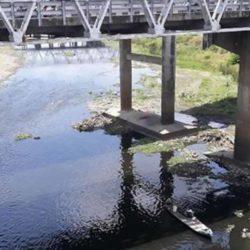 Duh, Sungai Bengawan Solo Tercemar Limbah Peternakan Babi