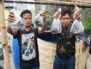 Implementasi Jogo Tonggo, Warga Bagikan Ikan Lele Untuk Tetangga